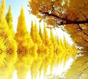 紅葉、黄色n
