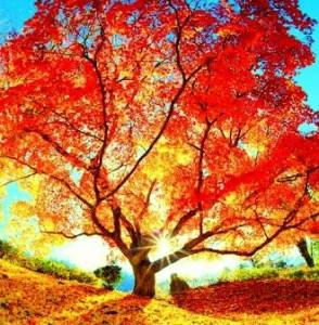 赤い木jpg