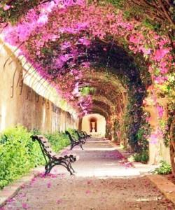 素敵な花道